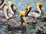 Eight Floating Pelicans