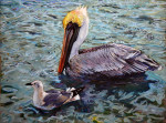 Gull & Pelican